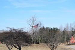 CR US FlagTrees