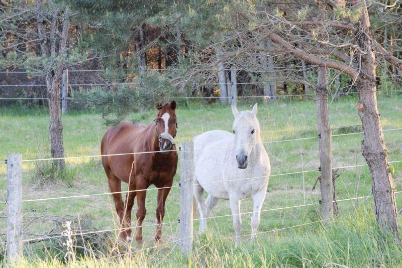 CR Horses