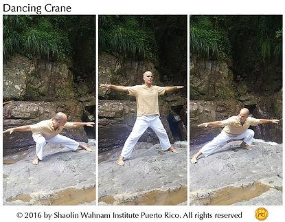 Dancing Crane web.jpg