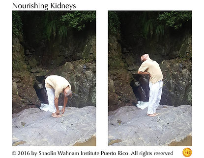 Nurishing kidneys web.jpg