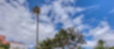 Palmera de San Juan de Telde-3.jpg