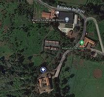 Alcornorque de Osorio.jpg