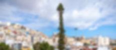 Araucaria Columnaris Mapfre-2.jpg
