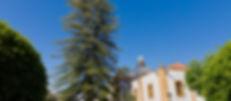 Araucaria de la Iglesia del Pino-1.jpg