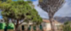 Drago de Luis Verde-3.jpg