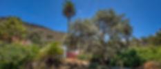 Encina del Tejar-2.jpg