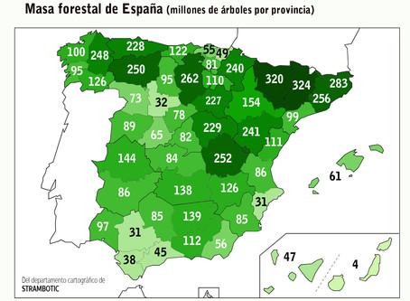 Mapa: las provincias españolas con más (y con menos) árboles