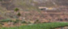 Palmeras de Tenoya-3.jpg