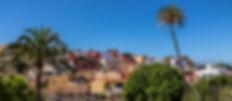 Palmera de Paquesito-3.jpg