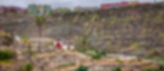 Palmeras de Lomo Verdejo-1.jpg