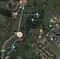 Ficus_de_Socotra_del_Jardín_Canario.jpg