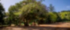 Ombus de Osorio-4.jpg