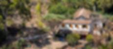 Drago del Barranquillo de Dios-1.jpg