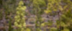Pinos de Inagua-8.jpg