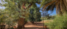 Robles de Osorio-1.jpg