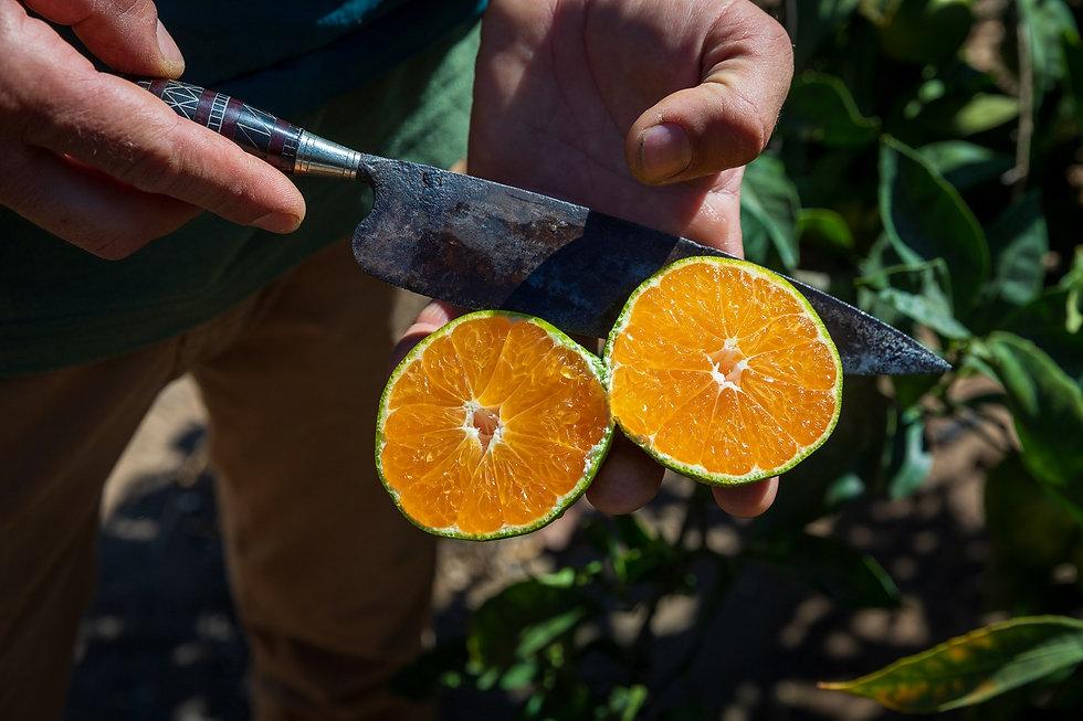 Frutas tropicales Fincas El Cubillo y García Ruiz-5_1620x1080.jpg