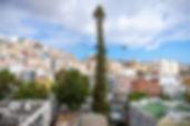 Araucaria_del_Toril_-_Árboles_Singulare