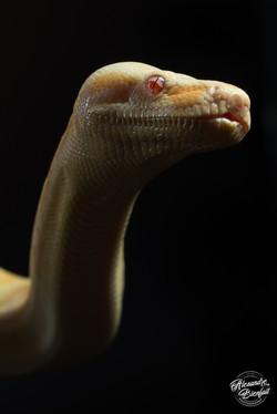 charmeur de serpents cote d'azur