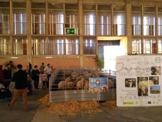 AMEGRA participó en FEGASUR 2018 con una exitosa degustación y una exposición de ganado