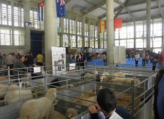 """Participación de AMEGRA en la Feria Ganadera """"FEGASUR 2012"""" en Jerez de la Frontera"""