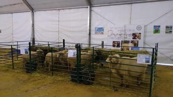 AMEGRA estuvo presente en AgroRonda 2019 (Feria Ganadera de Mayo de Ronda)