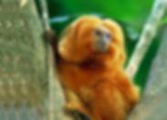 mico2.jpg