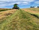 Uhlorn grass seed.jpg