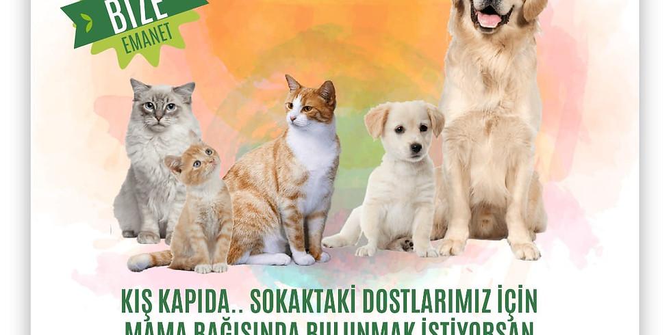 Sokak hayvanları destek toplantısı