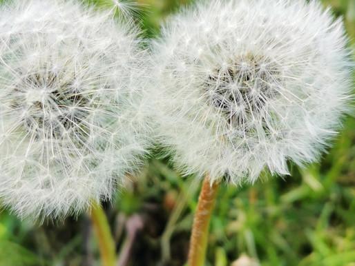 Juni - Einblicke, Rückblicke und Ausblicke