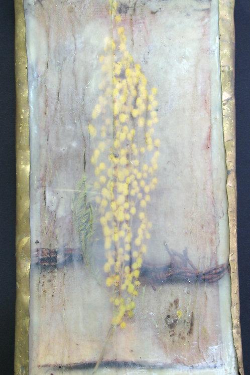 Mimosa del temps I