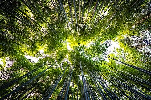 ambiental3.jpg