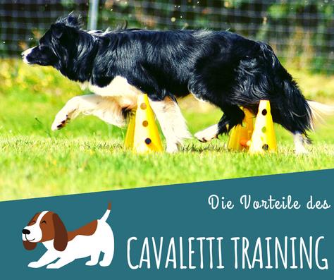 Die Vorteile des Cavaletti Trainings