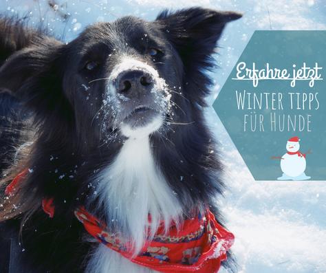 5 Tipps für Hunde im Winter