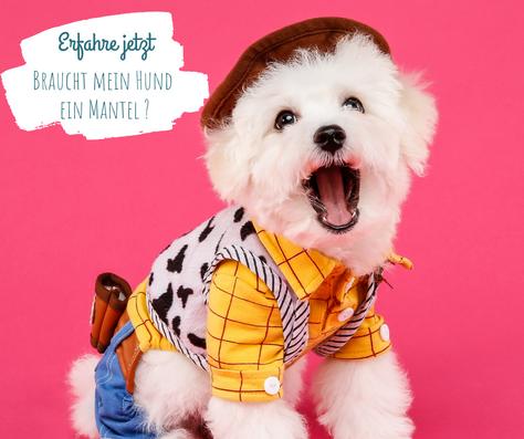 Braucht dein Hund einen Mantel ?