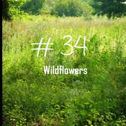 34 Wildflowers.jpg