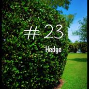 23 Hedge.jpg