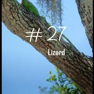 27 Lizard.jpg