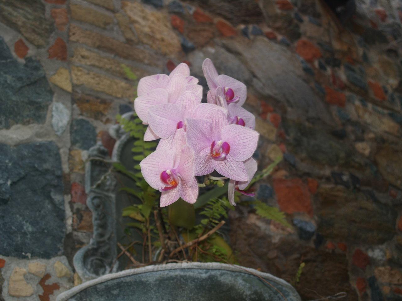 Foliage Pink 4