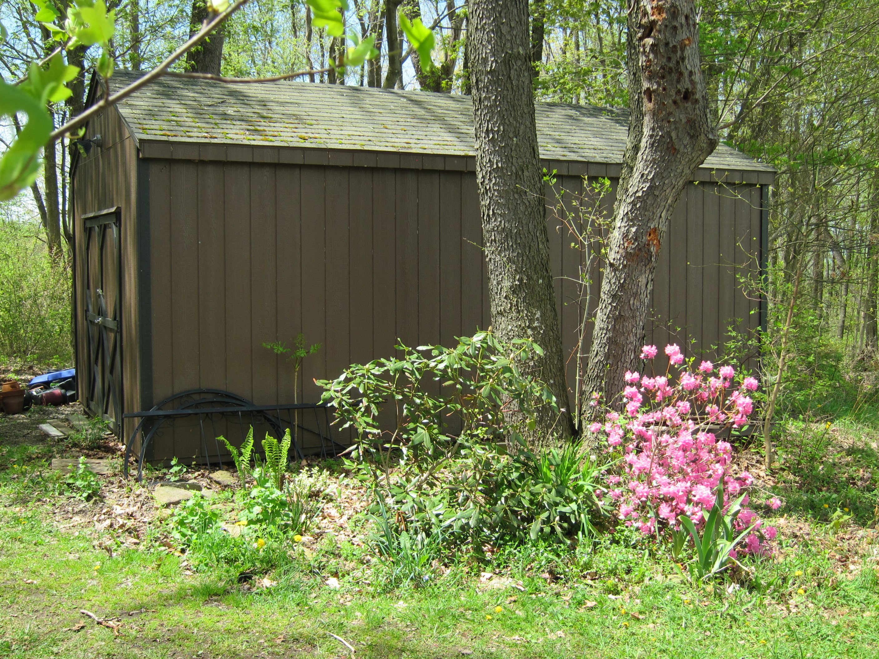 The Shed and Flowers