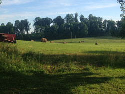 Fields of Hay at Fagel Farms