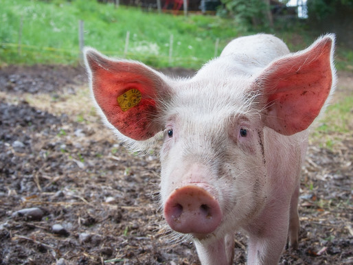 7 Reasons to Get Involved in Animal Science Undergraduate Research