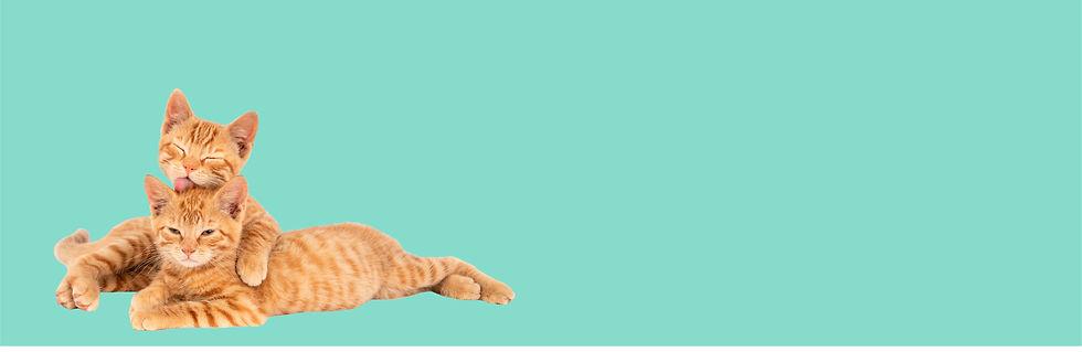 fondo gatos.jpg