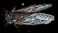 Cicada 1.png