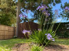 High res garden.jpg