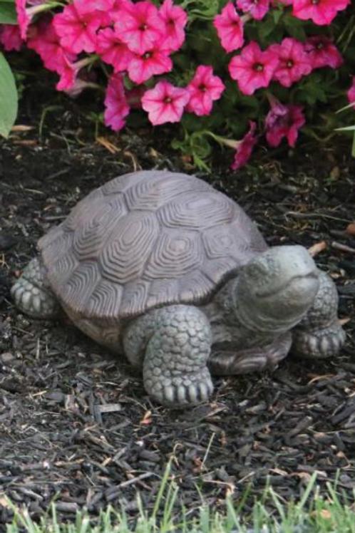"8"" Small Tortoise"