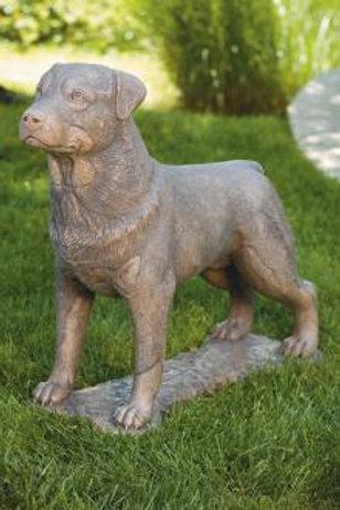 """30"""" Rottweiler"""