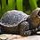 Thumbnail: Small Turtle - Plumbed