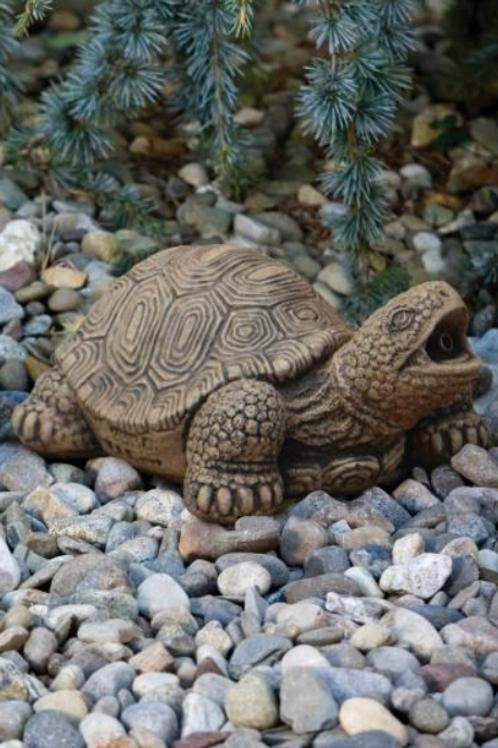 Medium Turtle-Plumbed