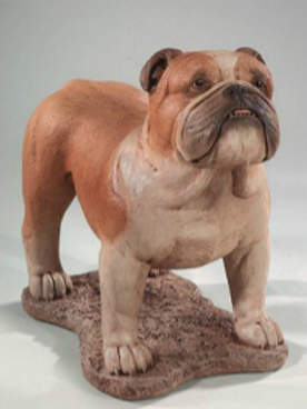 "21"" English Bulldog"