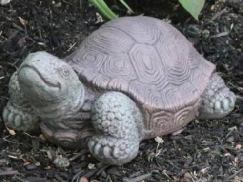 "7"" Small Tortoise"